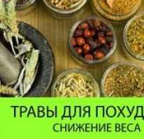 Лечебные травы для похудения и рецепты