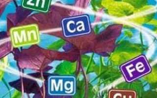 Какую роль играют минеральные вещества в питании человека?
