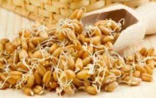 Как приготовить в домашних условиях проросшую пшеницу?