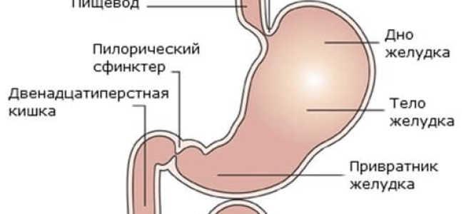 Как долго вода находится в желудке?