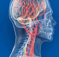 Как улучшить кровоток головного мозга народными средствами?