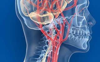 Как улучшить мозговое кровообращение в домашних условиях?