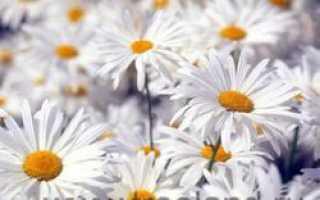 Польза растений в жизни человека и вред