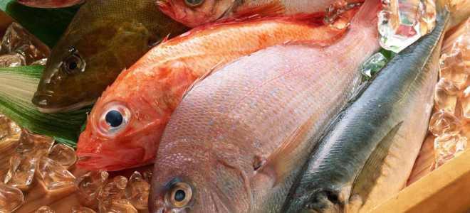 Много ли в рыбе белка
