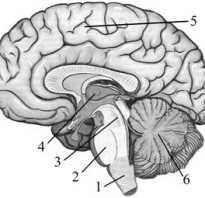 В каком отделе головного мозга располагаются центры речи человека