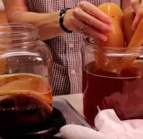 Что делать если порвался чайный гриб?